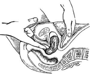 Размеры матки во время, до и после менструации