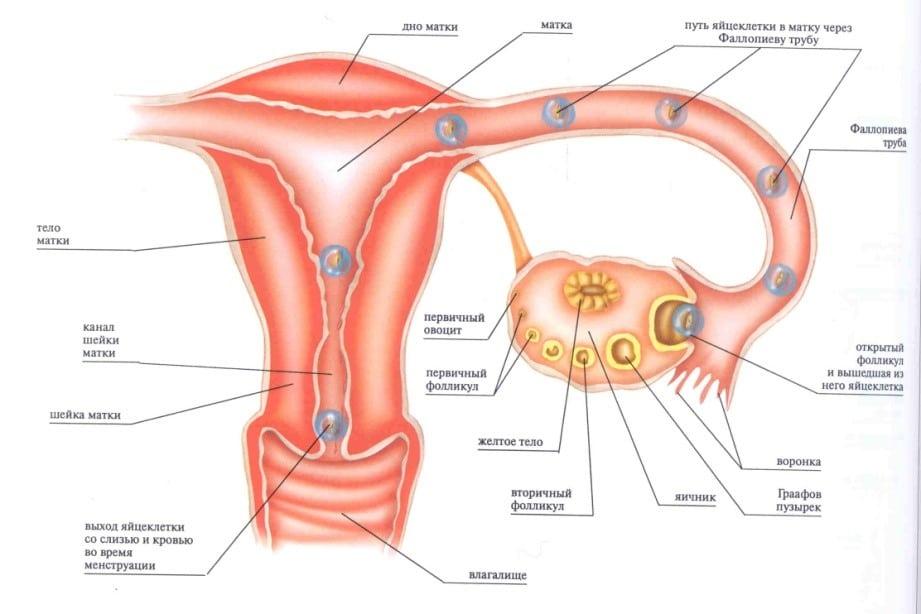 После. Выделения у При женщин. из влагалища беременности.