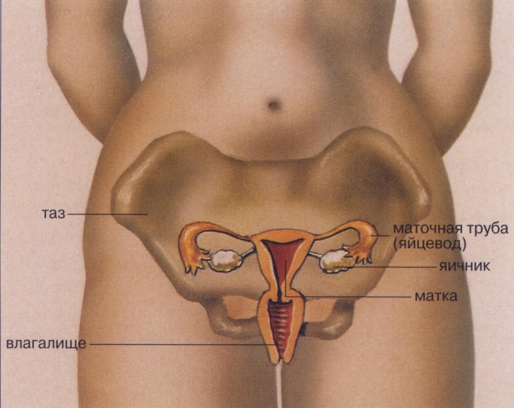 Фото выделений из женских половых органов